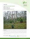 Course Report Tropical Forest Restoration Strategies