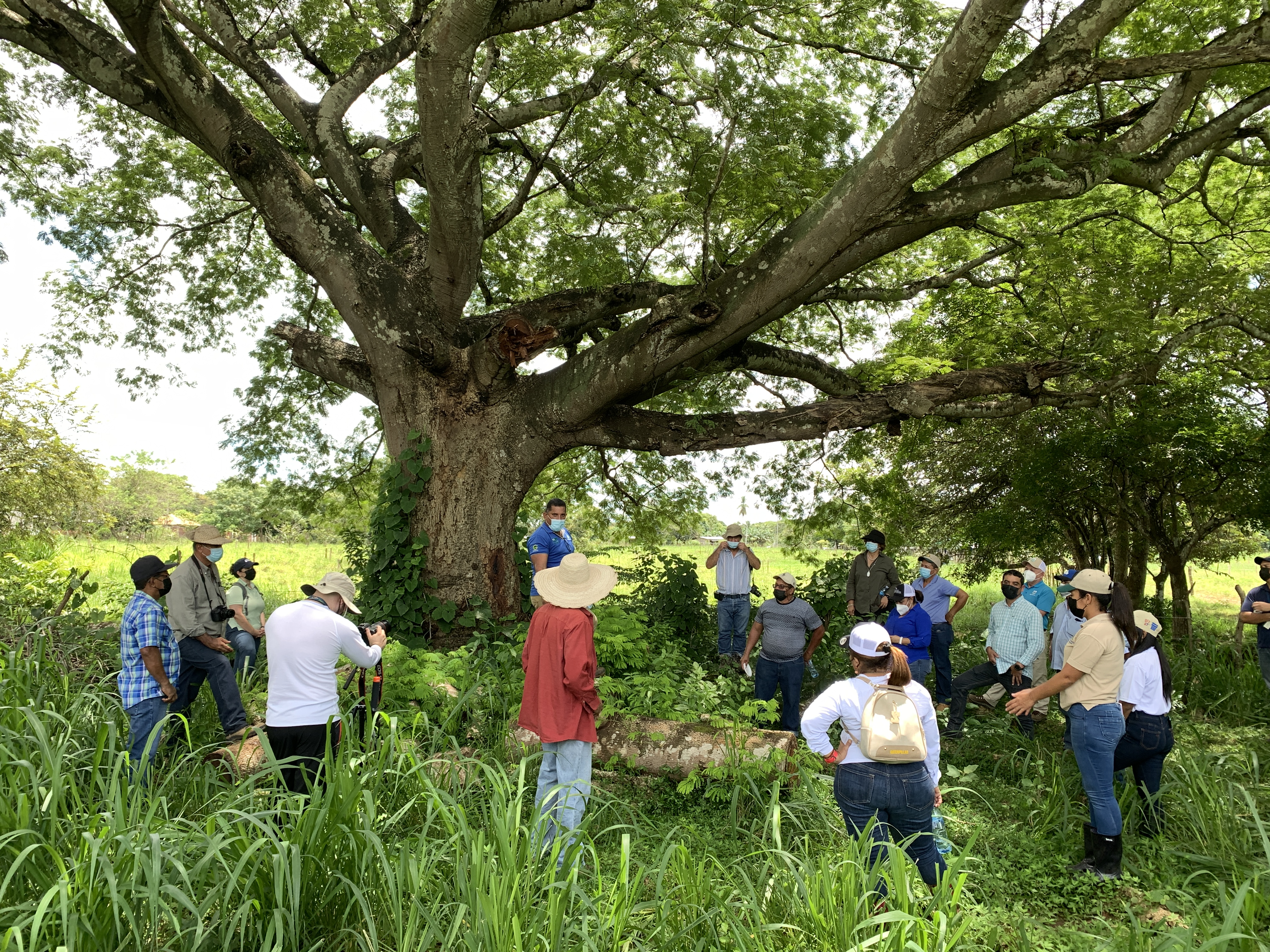 18 people surrounding a large, wide-branched tree. The people are wearing masks and are facing the tree, listening to one person talking. One man is taking a picture of the tree. They are surrounded by tall grass.