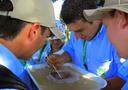 Restauración Ecológica en Paisajes Ganaderos