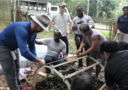 Participants creating a seedling recovery chamber during the January 2020 field course, Philippines.
