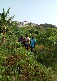 Visit to a plot of the classified forest of Anguédédou located in the Abidjan district.