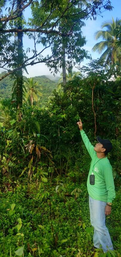 Vicente Escasinas geo-tagging native trees at Mt. Nacolod, Southern Leyte.