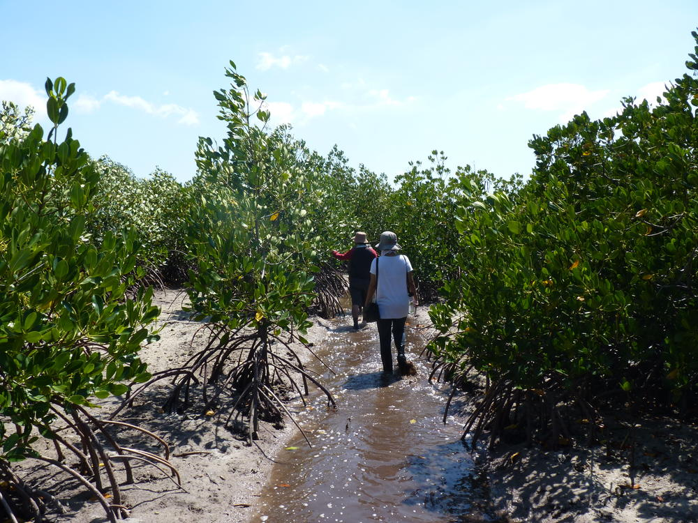 Walking through a Tanakeke mangrove rehabilitation site