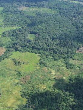The mosaic of land uses in Ucayali (Peruvian Amazon).