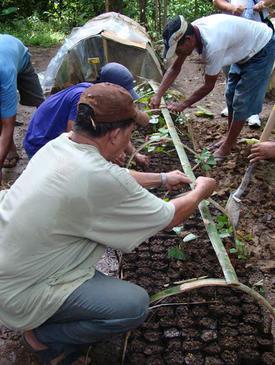 Rainforestation Monitoring 2011