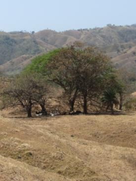 Ecological Restoration Strategies in Agricultural Landscapes of Panama