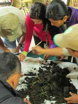 Ecological Restoration in Cattle Ranching Landscapes Manizales