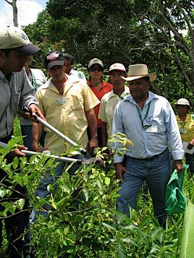 Workshop on Native Species Reforestation, and Agroforestry and Silvopastoral Systems