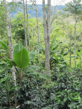 Agroecology Course Image - Colombia