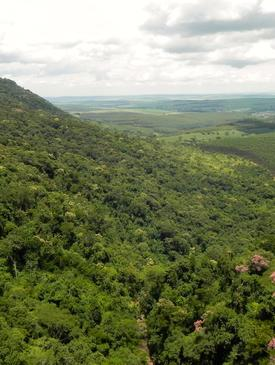 Atlantic Forest natural regrowth on slope and Eucalyptus below Sao Paulo State