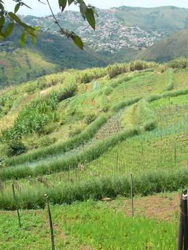 El Vetiver farm near Cali, Colombia