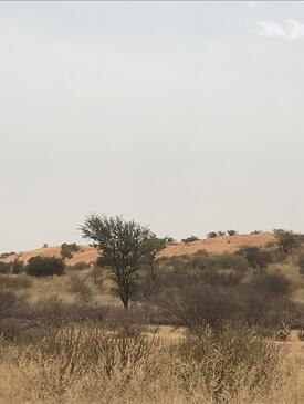 Forest landscape in Niger.