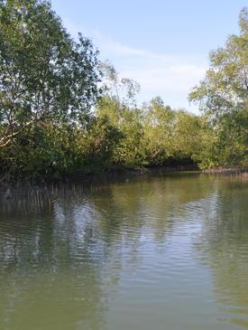 Sungai Hitam mangrove forest