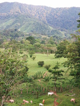 Silvopastoral systems integrate trees, forage shrubs and livestock production and are particularly appealing since they enable farmers to enhance traditional livelihood practices in a more environmentally sustainable manner.