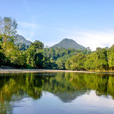 Forest corridors in East Kalimantan