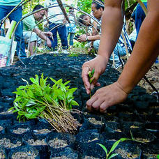 Planting native tree seedings during an ELTI field course, Philippines