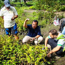 Dr. Marlito Bande of Visayas State University and Dr. David Neidel of ELTI discussing seedling quality